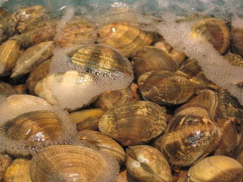 Clam urdu meaning of clam related imagesvisuals for clam stopboris Images