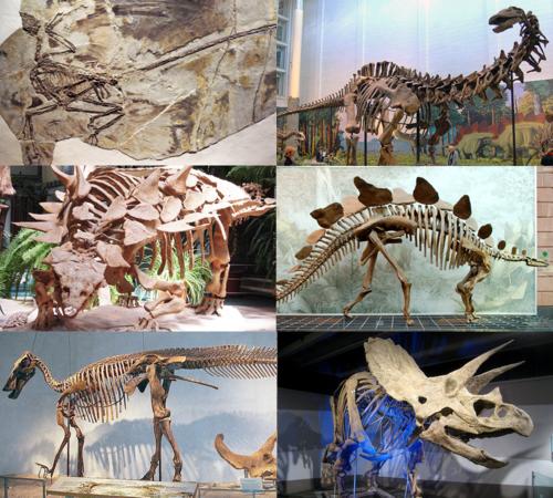 Dinosaur Telugu Meaning Of Dinosaur