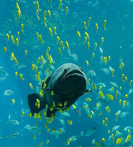 Fish | Telugu Meaning of Fish