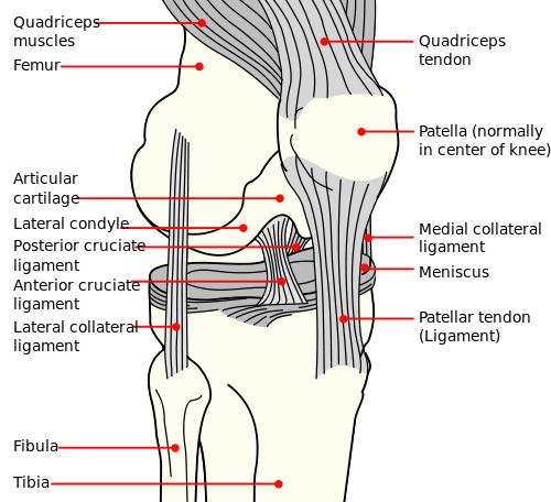 Ligament hindi meaning of ligament ligament hindi meaning ccuart Choice Image