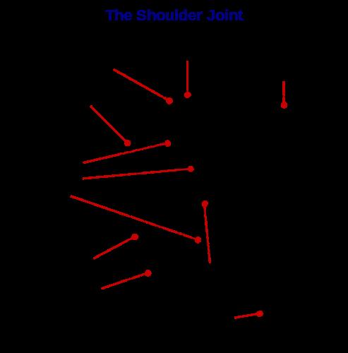 Shoulder urdu meaning of shoulder related imagesvisuals for shoulder stopboris Images