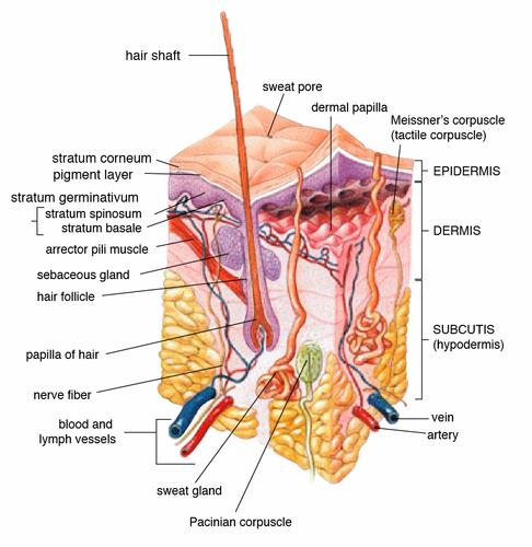 Skin | Tamil Meaning of Skin