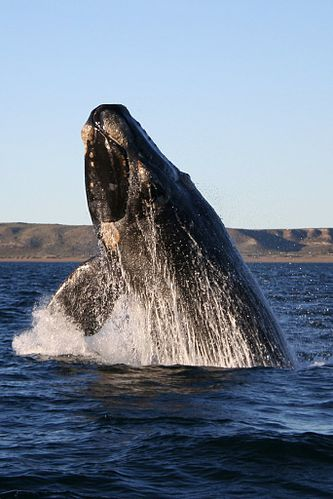 Whale | Telugu Meaning of Whale